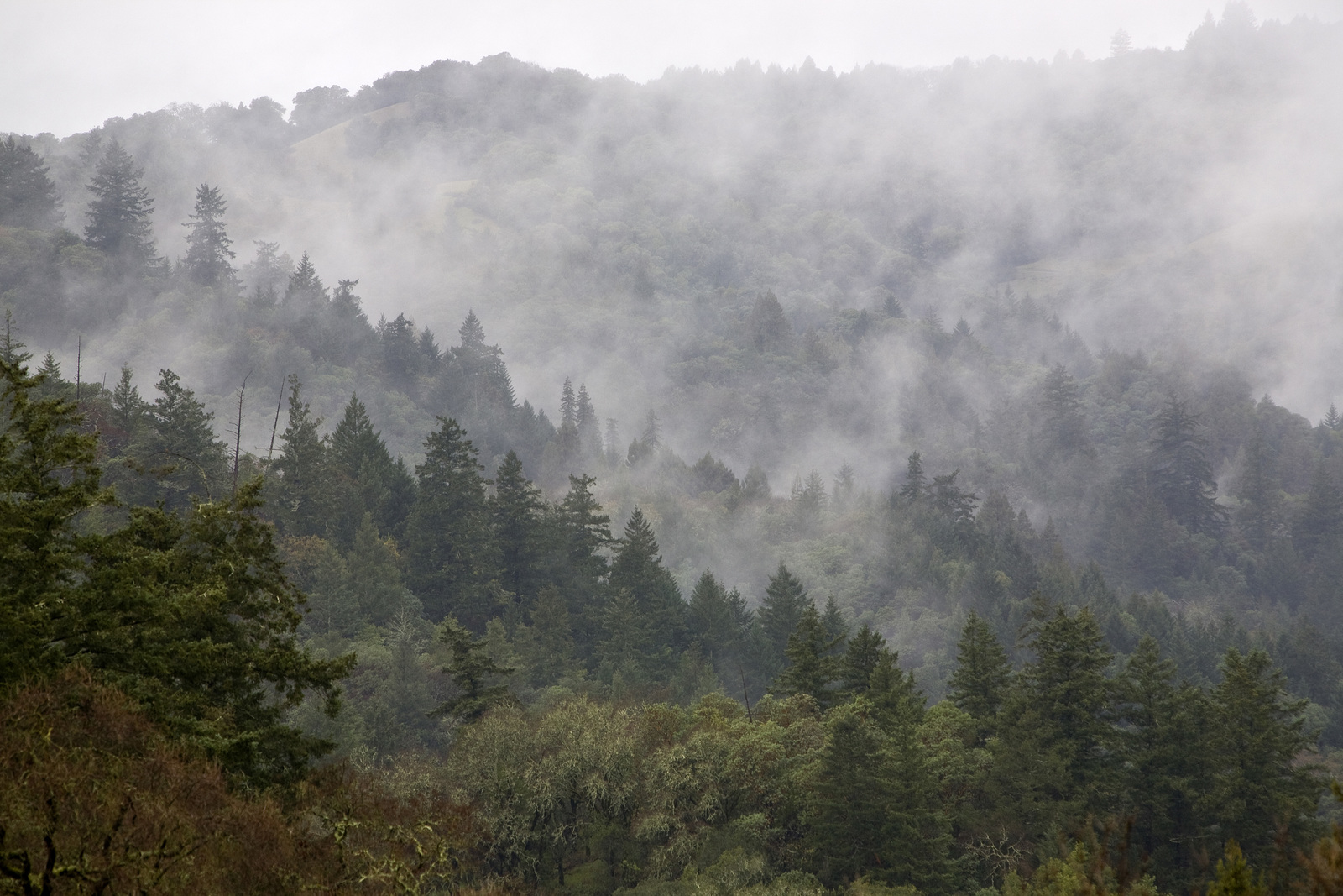 how california uses forests and economic forces to fight how california uses forests and economic forces to fight climate change