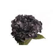2016-02-08-1454958645-6574903-blackhydrangea2_2.jpg