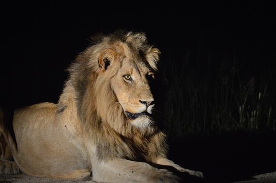 2016-02-09-1454983640-6428073-8_Lions.jpg