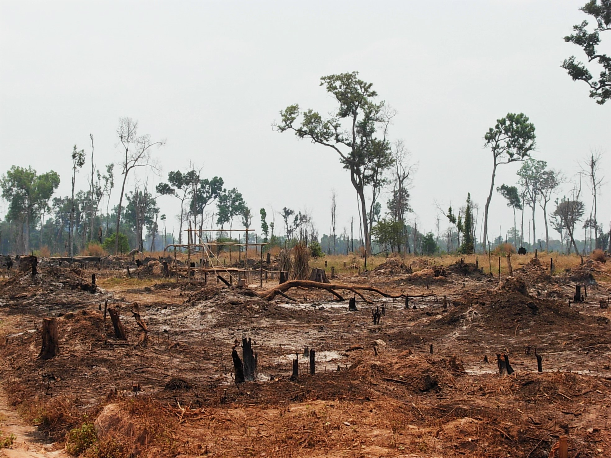 illegal logging A step backward new figures coming from the brazilian government suggest illegal logging has taken more trees from the amazon rainforest than previously expected.