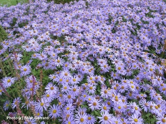 2016-02-12-1455280983-1903165-Harrogate_Harlow_Carr_Gardens_2.jpg