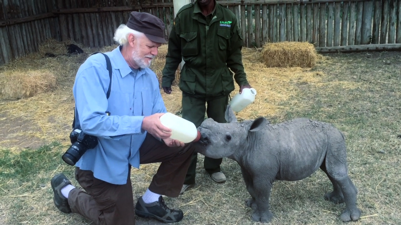The Beatles Polska: Poznajcie małego nosorożca o imieniu Ringo