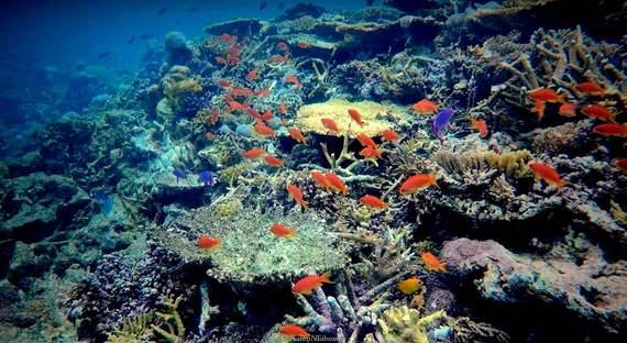 2016-02-17-1455670608-4187976-COPYRIGHT_KarenEdwards_Fiji_RainbowReef2.jpg