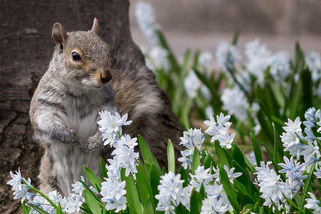 2016-02-17-1455728692-7498166-squirrel.png