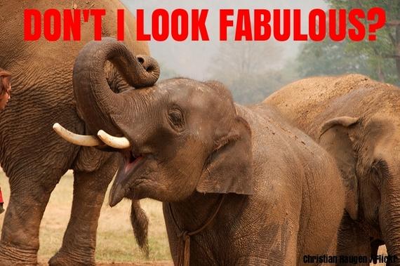 2016-02-23-1456249735-5837776-elephant.jpg