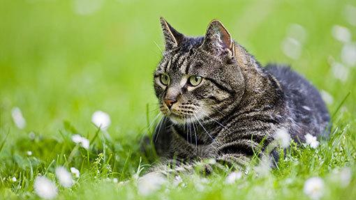 2016-02-23-1456256899-7738022-cat.jpg