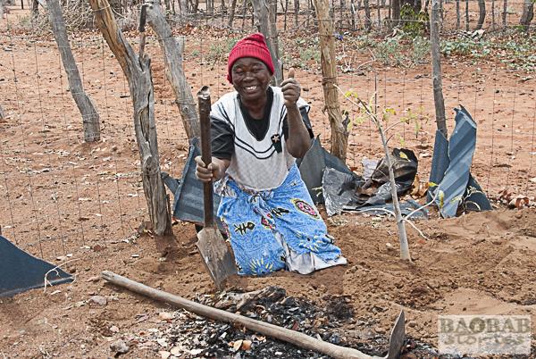 baobab kologie starthilfe f r giganten heike pander. Black Bedroom Furniture Sets. Home Design Ideas