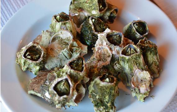 2016-02-26-1456456023-491357-barnacles.jpg