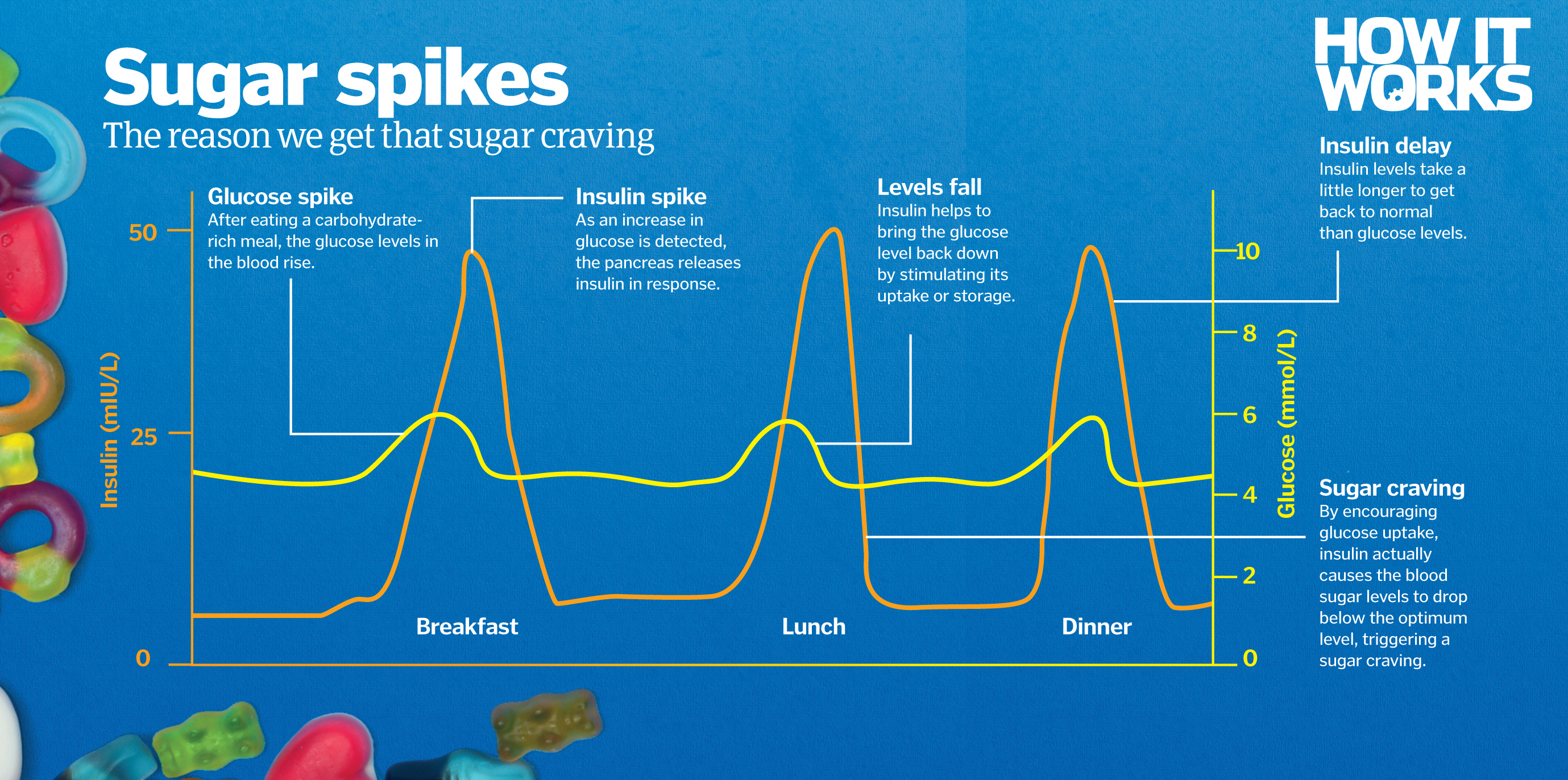 Image result for sugar cravings spike
