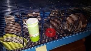 2016-02-27-1456563187-5688350-Hamster6_HP.jpg