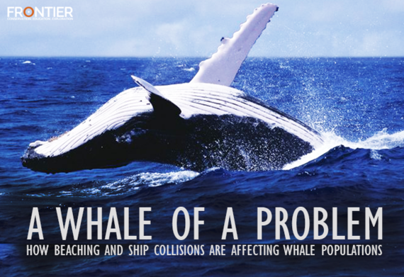 2016-03-03-1457002907-8538692-whaleofaproblem.png