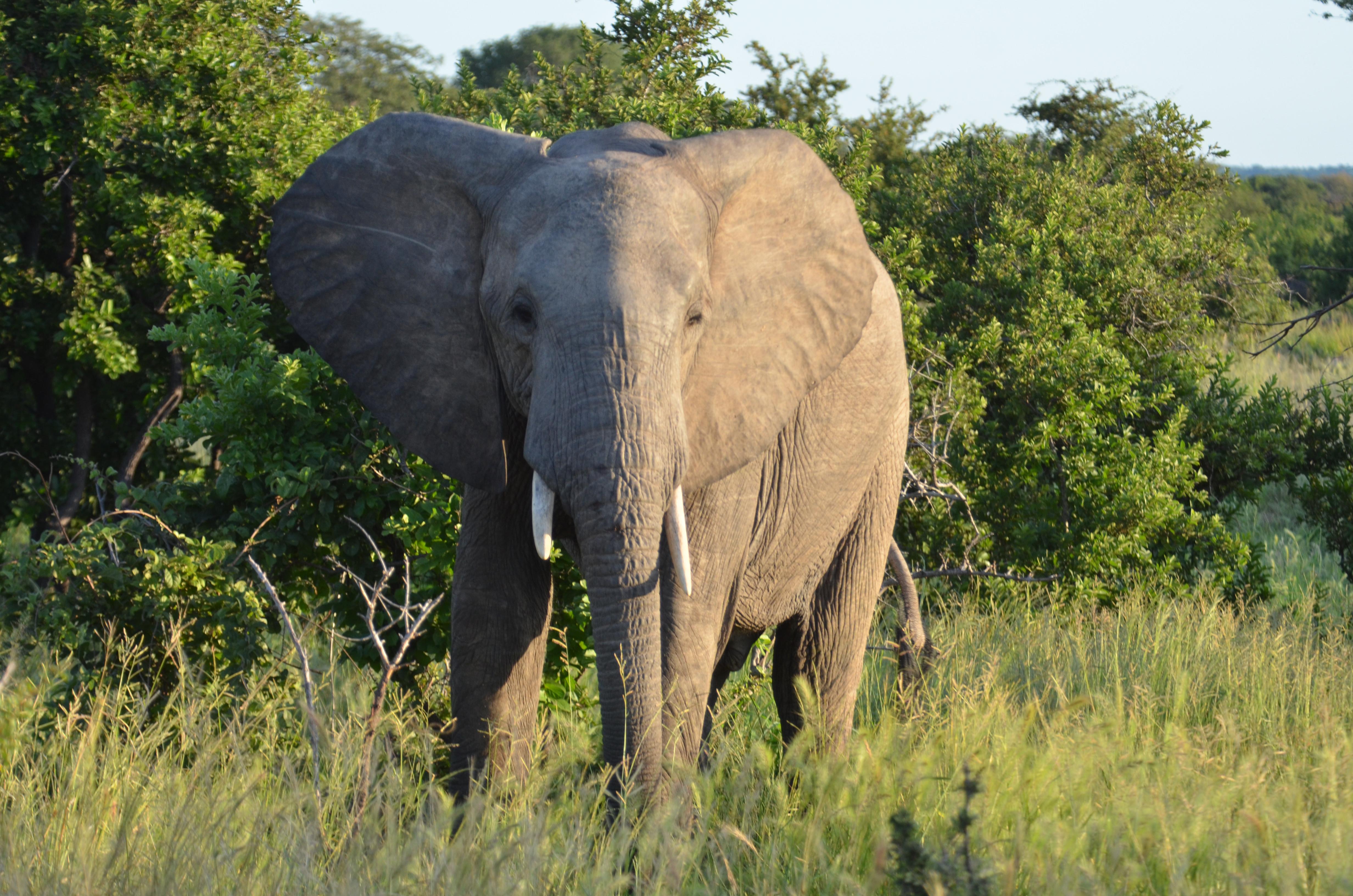As We Celebrate World Wildlife Day, Elephants Keep ...  As We Celebrate...