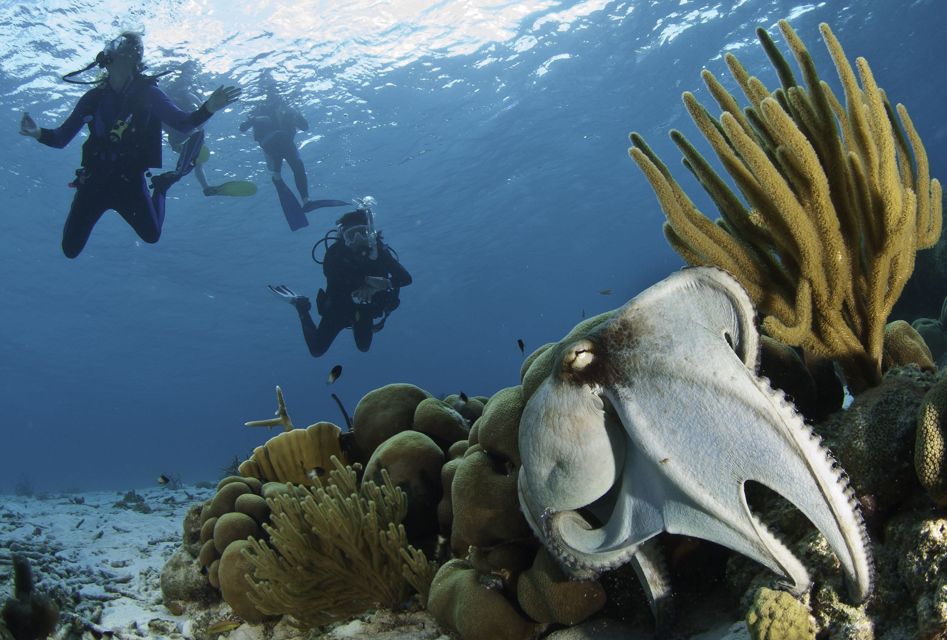 Caribbean Diving: Dive Into The Caribbean Right Now