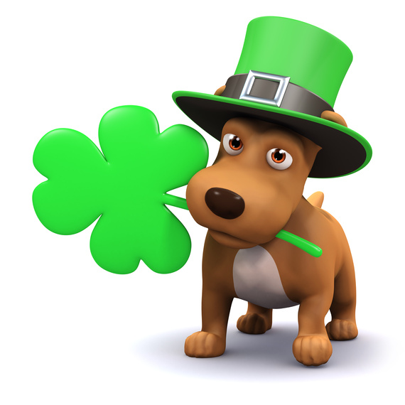 5 fun ways to spend st patrick s day with your dog huffpost