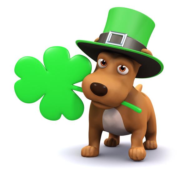 Image result for green saint patricks dog