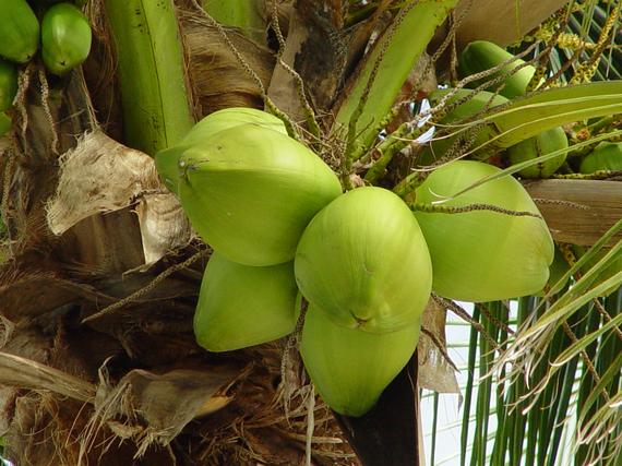 2016-03-10-1457636591-9827957-coconuts.jpg