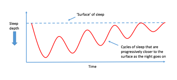 2016-03-11-1457720481-5768275-Sleepcyclediagram.png