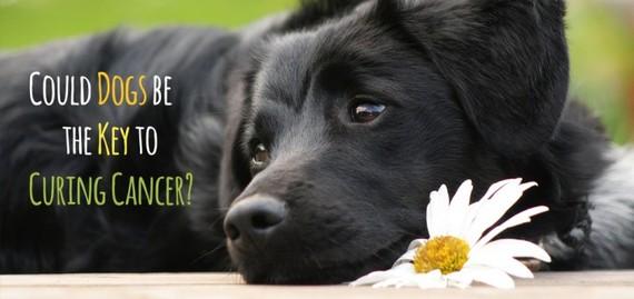 2016-03-14-1457981320-622327-DogsCancerGetLeashedMagazine720x340.jpg