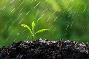2016-03-17-1458251793-3555842-Rainonplant.jpg