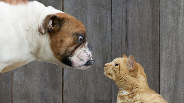 Perspectives Of Dogs And Cats