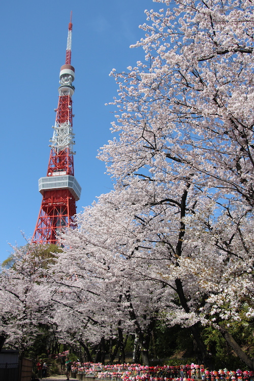 Tokyo Tower At Night With Cherry Blossoms
