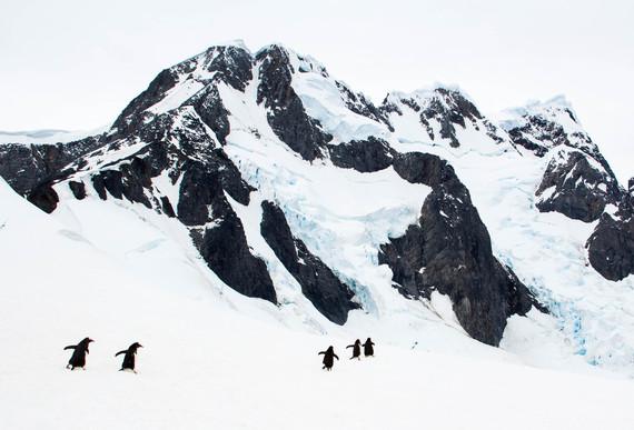 2016-03-29-1459250862-875188-Penguins_Antarctica.jpg
