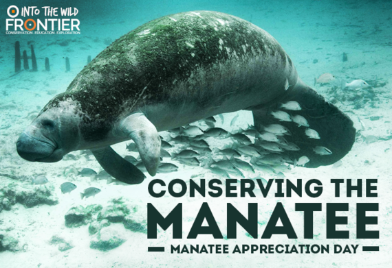 2016-03-30-1459344814-9651674-MANATEE.png