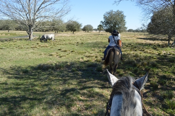 2016-04-01-1459553255-1261296-horsebacktrail.jpg