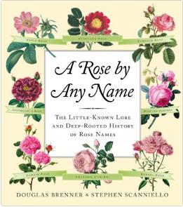 2016-04-02-1459605011-9521854-rosebyanyname.png