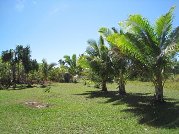 2016-04-04-1459781815-3934244-AitutakiGarden.jpg