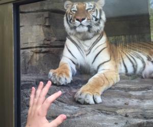 2016-04-06-1459913746-300642-Tiger.png
