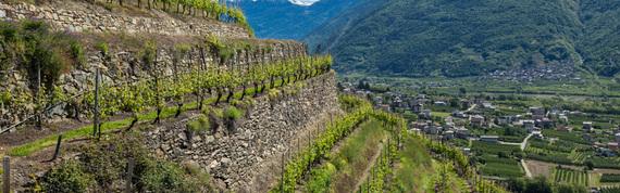 2016-04-08-1460159146-538630-Valtellina13.jpg