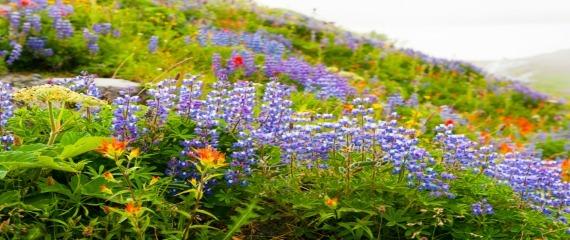 2016-04-09-1460215113-9042372-iStockPurpleflowersAwareChoicesApril2016570X240.jpg
