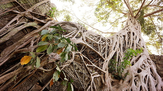 2016-04-11-1460378578-4003927-Angkor03904.JPG