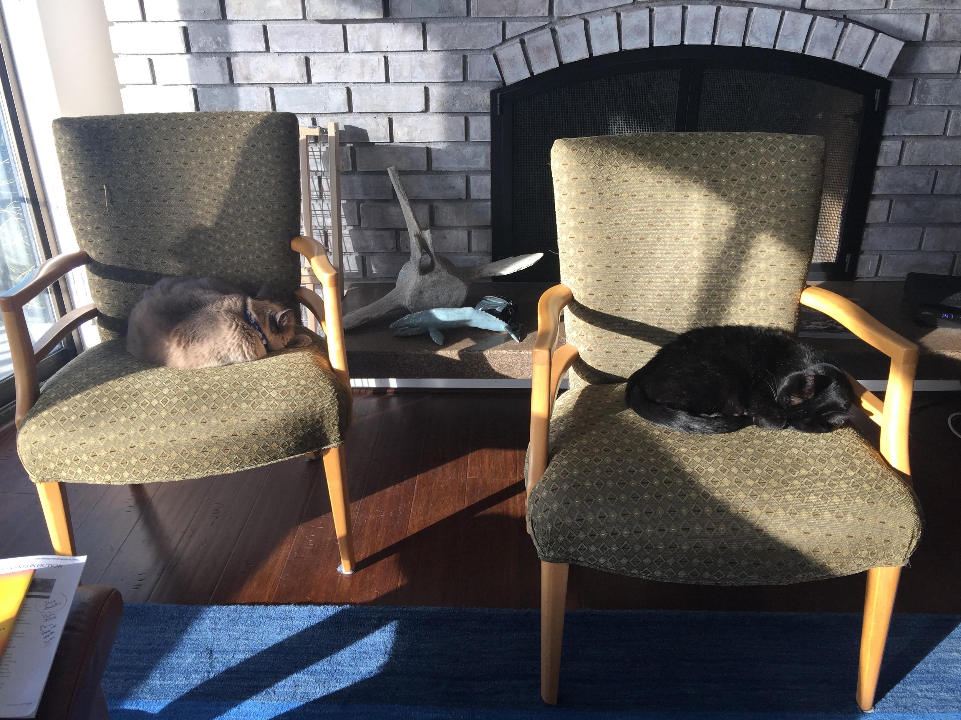 Cat Naps Huffpost