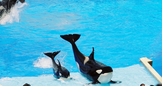 2016-04-13-1460553541-5587279-orca1.jpg