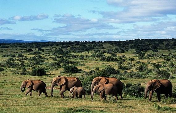 2016-04-13-1460584484-365631-Addo_Elephant_National_Park_021.jpg