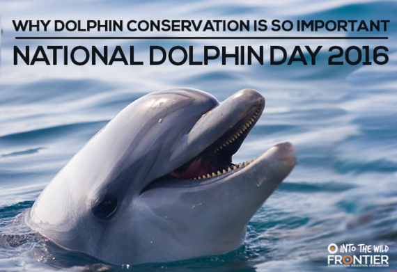 2016-04-14-1460631149-2393166-dolphinday.png