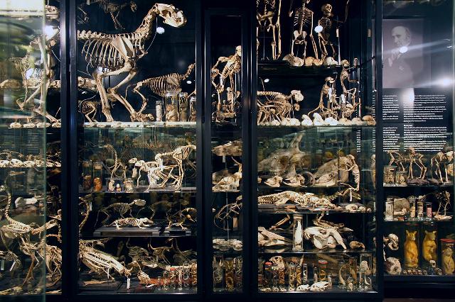 Amsterdam Natural Science Museum