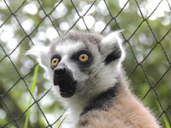 2016-04-18-1461007184-9694013-lemur364161_1280.jpg