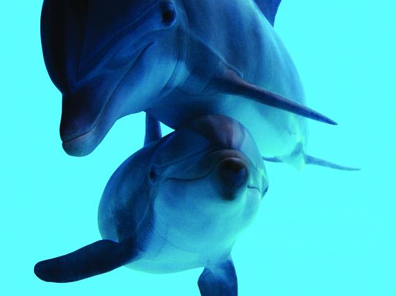 2016-04-18-1461013575-7223851-35.Animals.Dolphins.jpg
