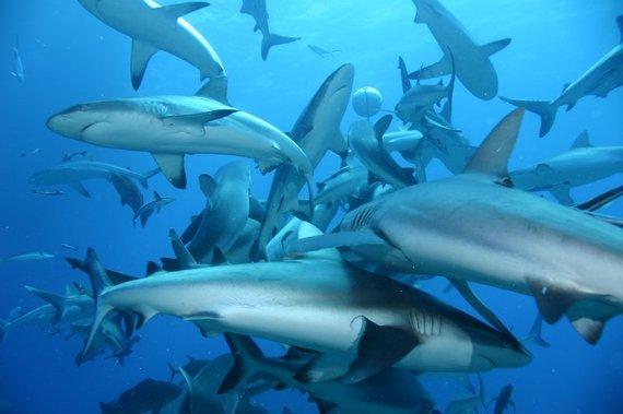 2016-04-19-1461058744-6975862-shark.jpg