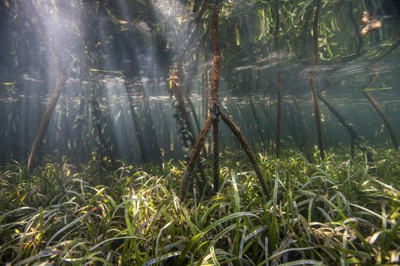 2016-04-21-1461259235-948789-mangroves_57067173.jpg