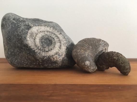 2016-04-22-1461325710-3476206-fossils.jpg