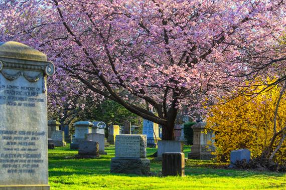 2016-04-22-1461354151-7225941-Mount_Pleasant_Cemetery_in_cherry_blossom.jpg