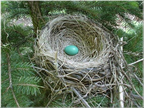 2016-04-28-1461871578-373157-nest.jpg
