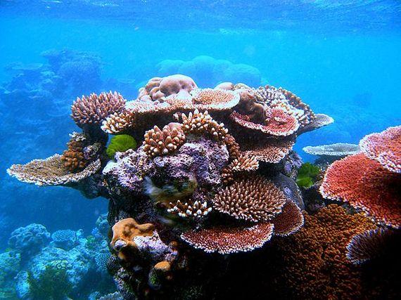 2016-04-29-1461965434-6986394-Coral_Outcrop_Flynn_Reef.jpg