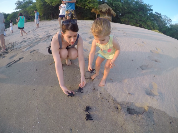 2016-04-30-1461986700-2791971-8BabyTurtleRelease.png