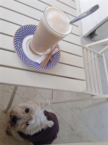 2016-05-02-1462210124-4385247-latte14dog.jpg