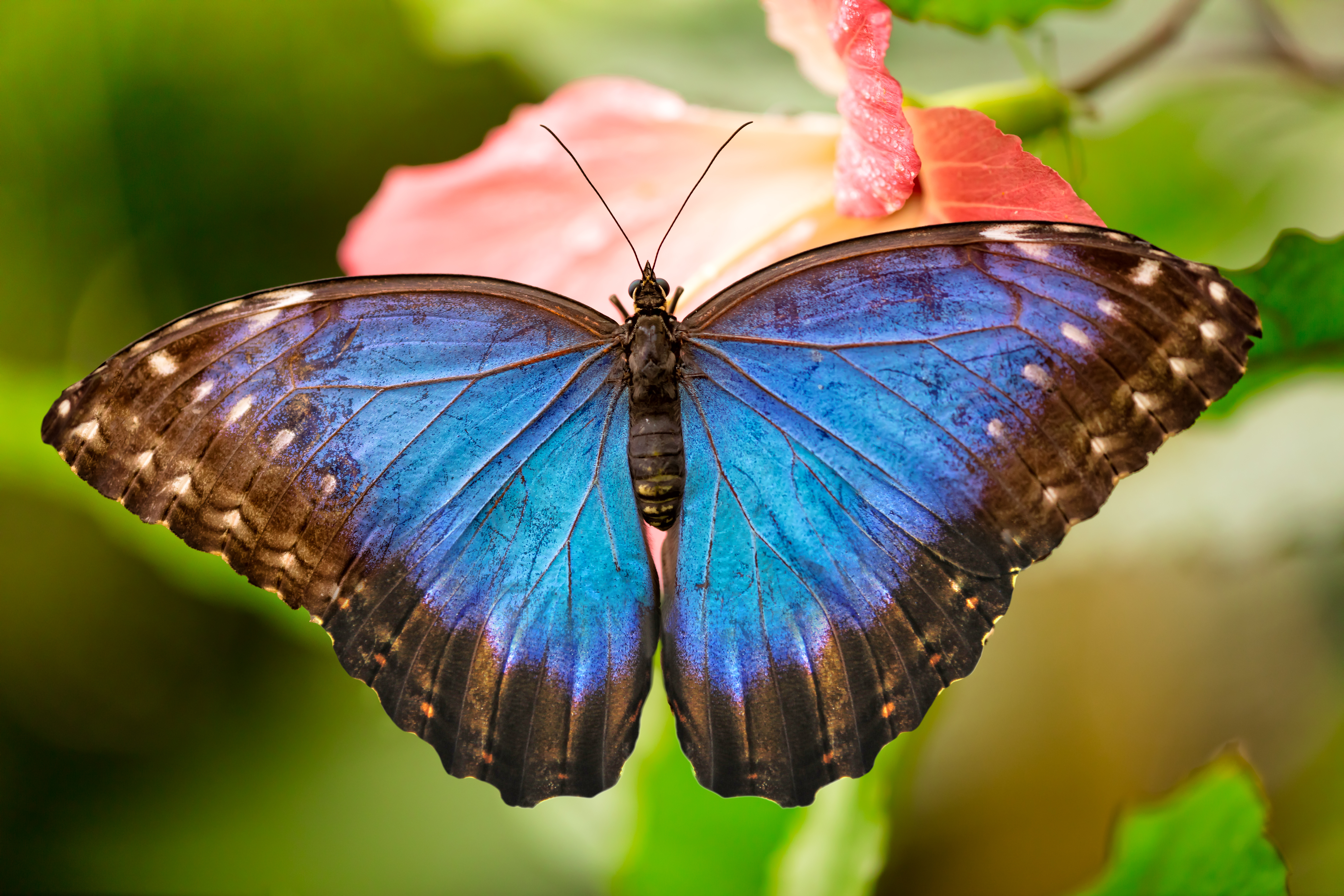 The Butterfly Effect: Personal Cycles of Transformation ...